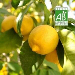 Citrons-bio
