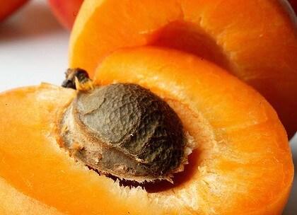 comment planter un noyau d'abricot