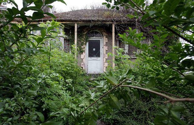 jardin en friche
