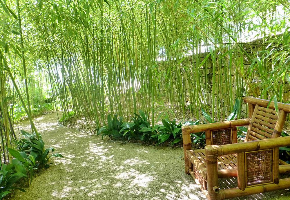 Comment faire pousser du bambou dans son jardin?