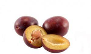 noyau de prune planter