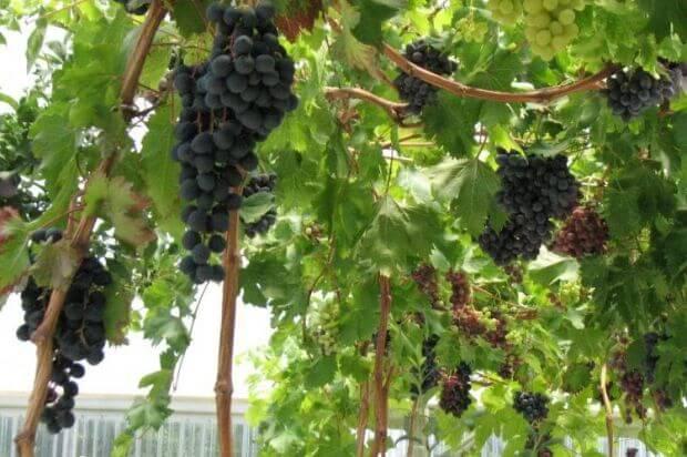 9 fruits que vous pouvez faire pousser en intérieur