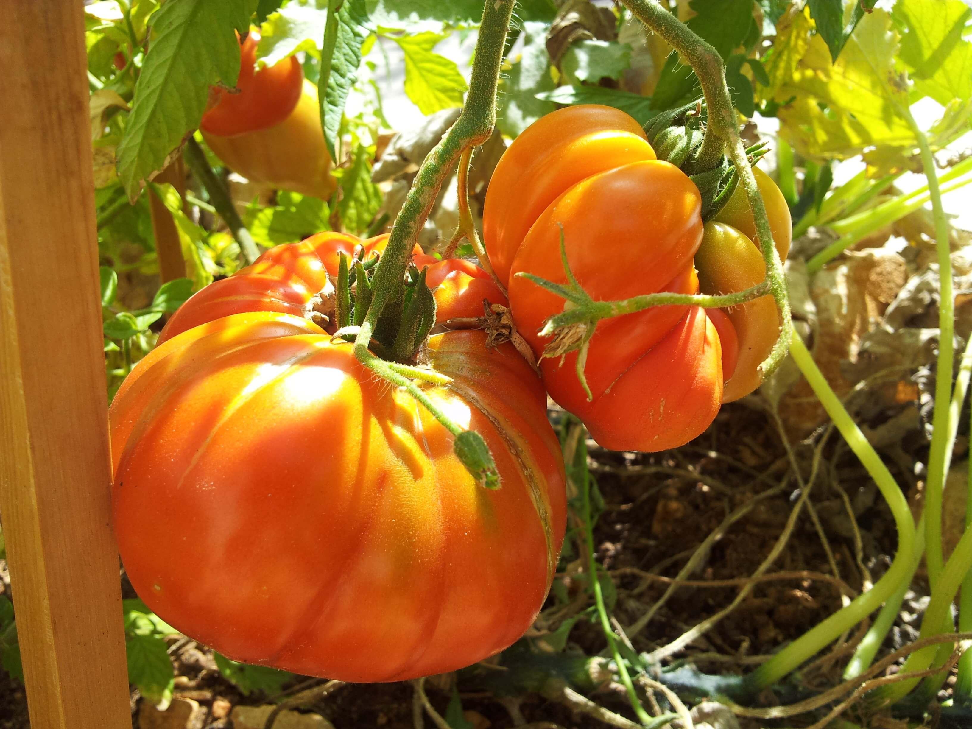 Les 5 éléments dont vous avez besoin pour démarrer un jardin potager