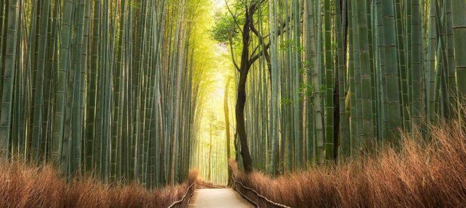 Les barrières de rhizome fonctionnent-elles pour du bambou ?