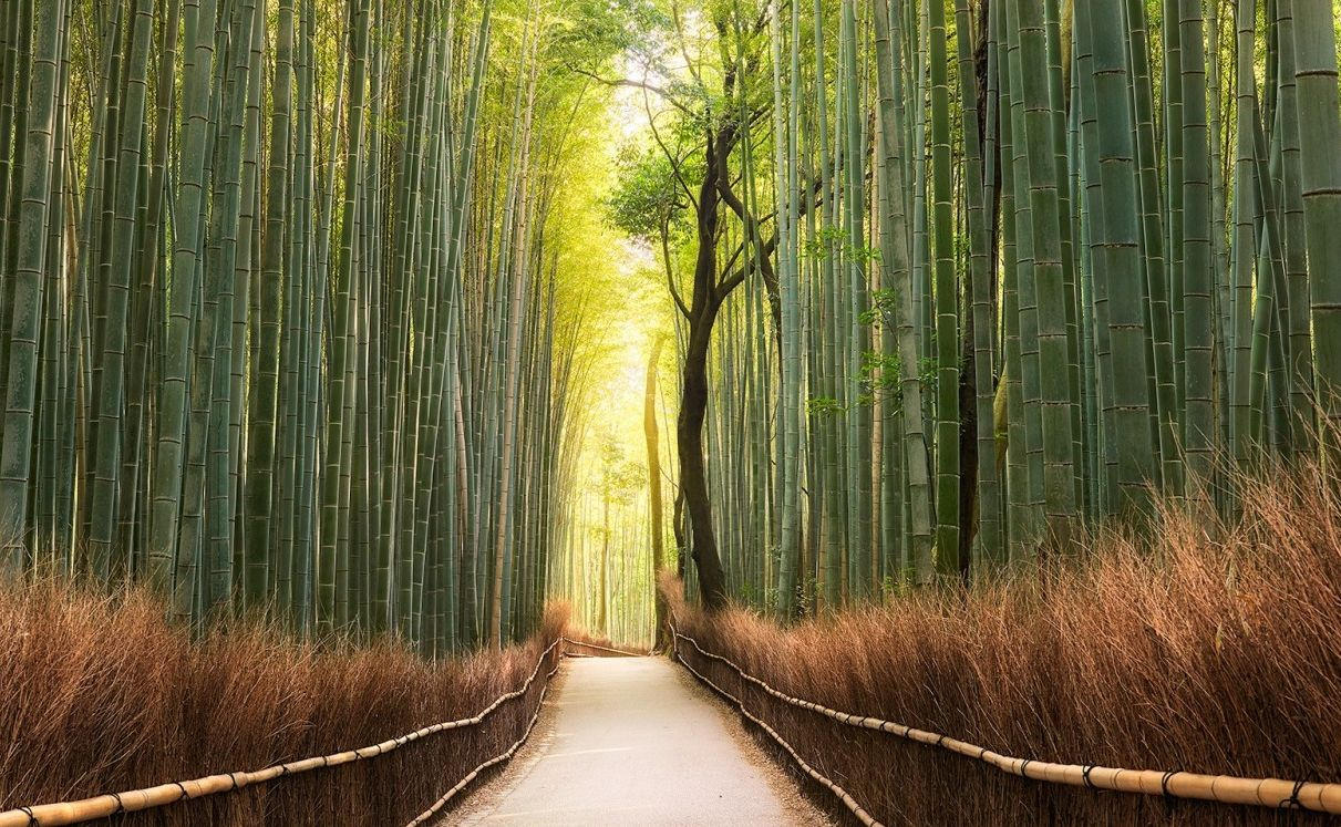 Comment Faire Pousser Bambou les barrières de rhizome fonctionnent-elles pour du bambou