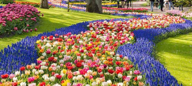 Comment créer un superbe jardin de fleurs