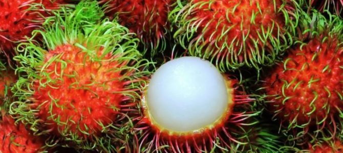 Comment faire pousser des ramboutans (chom chom) à partir d'un noyau