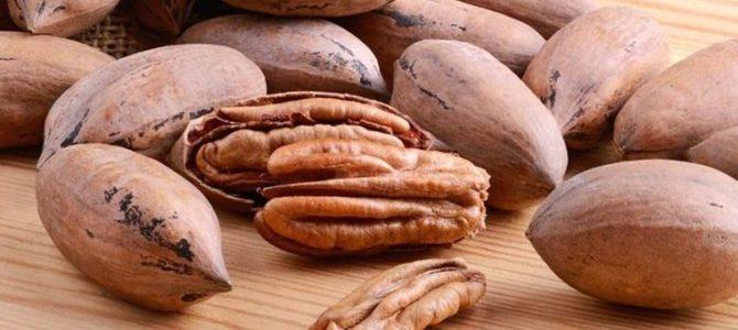 Comment faire pousser un pacanier à partir d'une noix de pécan